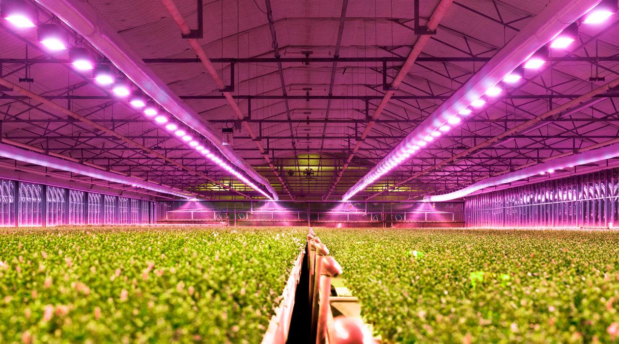grow_light_LED